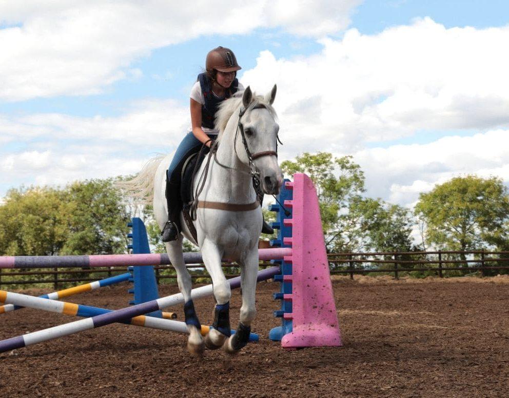 Horse-13-992x776.jpg