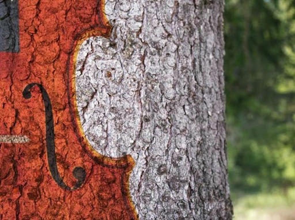 violino sull'albero