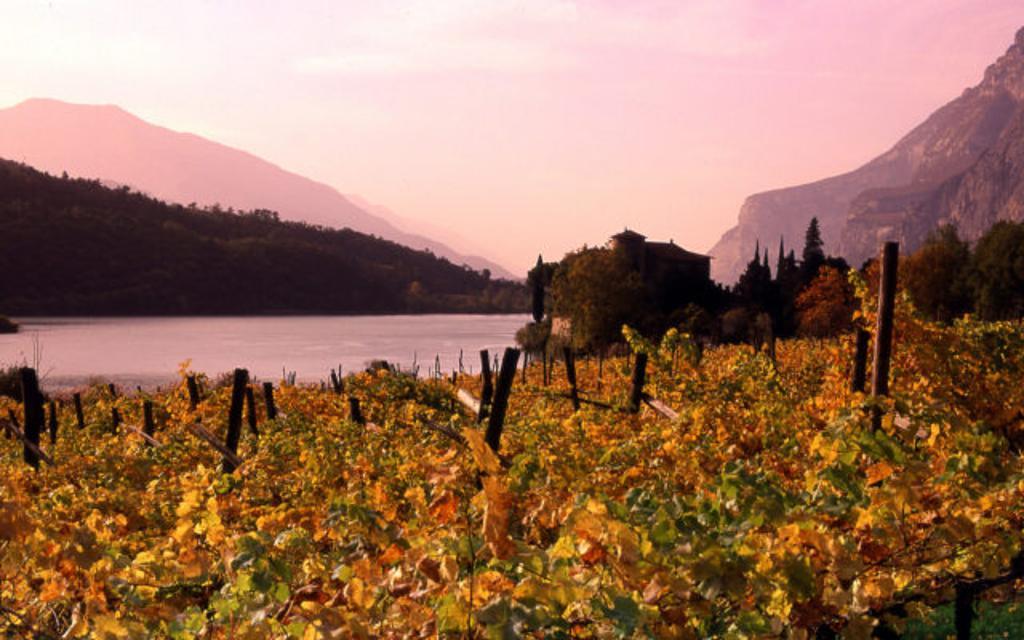 Nosiola: il vino che sa di nocciola