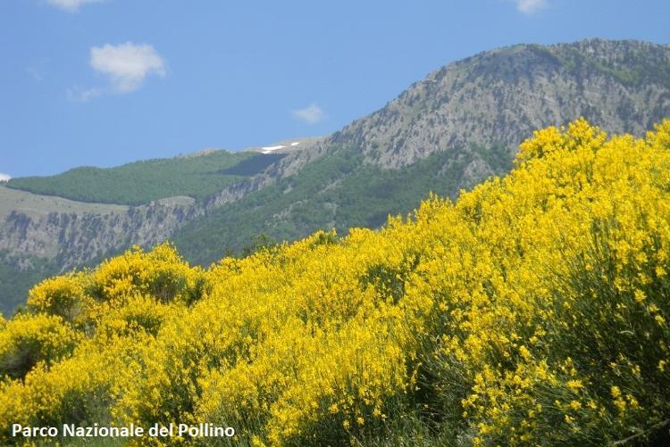 2 Dolcedorme e Bosco di Pollinello da Conca del Re-rid.jpg